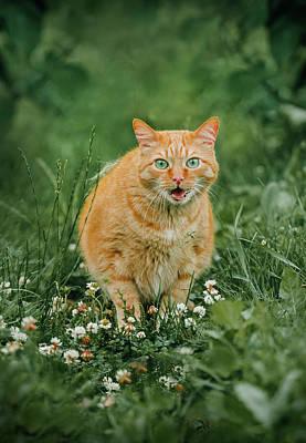 Cats Photograph - Ginger Cat In Grass by Oksana Ariskina