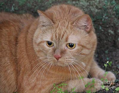 Pyrography - Ginger Cat by Sergey Lukashin