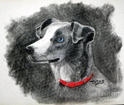 Drawing - Ginger In Charcoal by Terri Mills