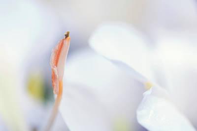Photograph - Ginger Lily Closeup by Liza Eckardt