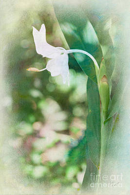 Photograph - Ginger Lily by Diane Macdonald