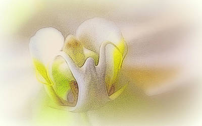 Photograph - Gini's Orchid by Lori Pessin Lafargue