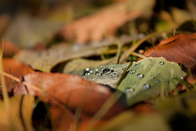 Photograph - Ginkgo   by Bulik Elena