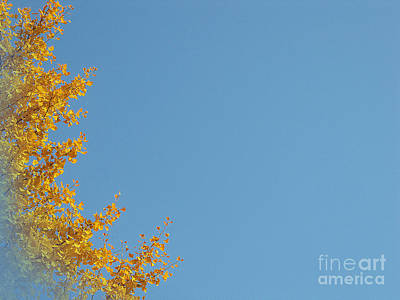 Photograph - Ginkgo Fantasy In Blue by Eena Bo