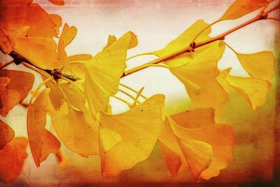 Gingko Wall Art - Digital Art - Ginkgo Glory by Terry Davis