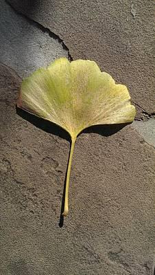 Photograph - Ginkgo On Stone by Liza Eckardt