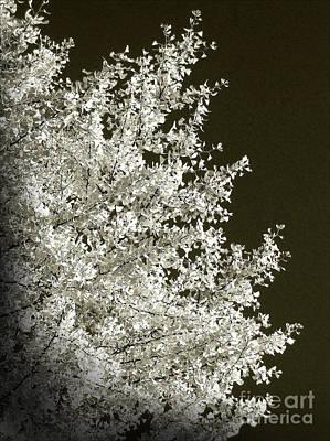 Photograph - Ginkgo Tree by Eena Bo