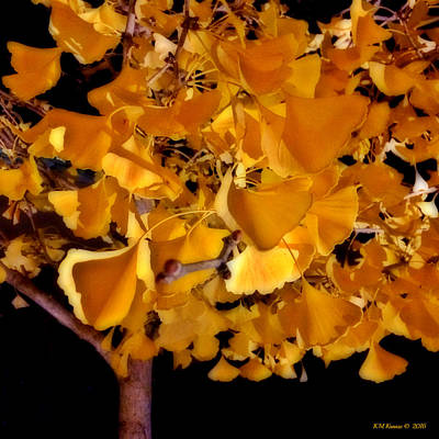 Photograph - Ginkgo Tree by Kathy M Krause