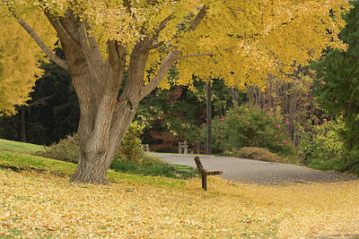 Uc Davis Photograph - Yellow Ginkgo Tree In The Autumn by Alessandra RC