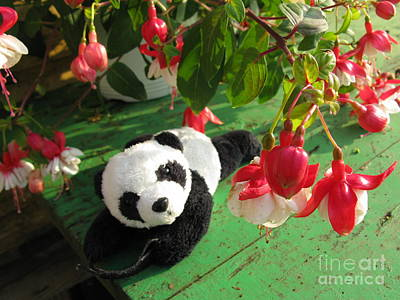 Photograph - Ginny Under The Red And White Fuchsia by Ausra Huntington nee Paulauskaite