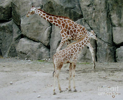 Photograph - Giraffe And Baby  by Donna Brown