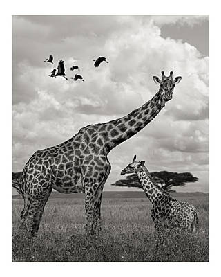 Giraffe And Baby On African Savanna Original by Vic DeSantis