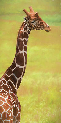 Graceful Photograph - Giraffe - Backward Glance by Tom Mc Nemar