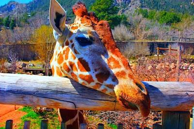 Wall Art - Photograph - Giraffe by Cheryl Bishop