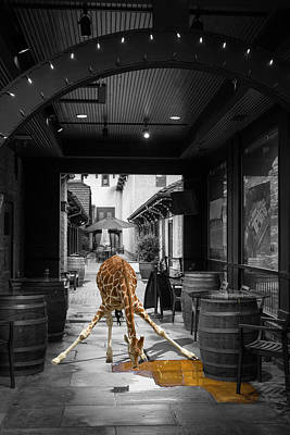 Photograph - Giraffe Drinking Whiskey Series 4987y by Carlos Diaz