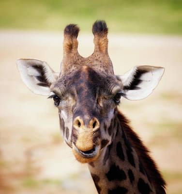 Photograph - Giraffe Face by Gloria Anderson