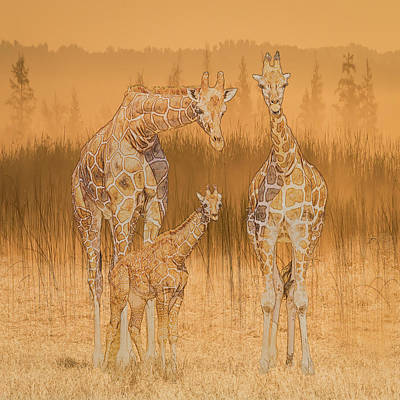 Photograph - Giraffe Family Portrait by Patti Deters
