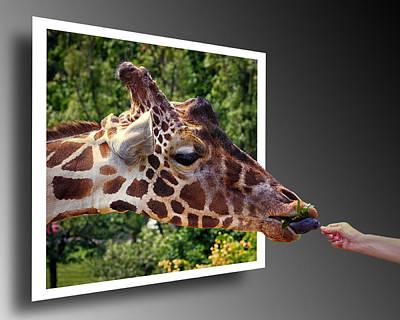 Giraffe Feeding Out Of Frame Art Print