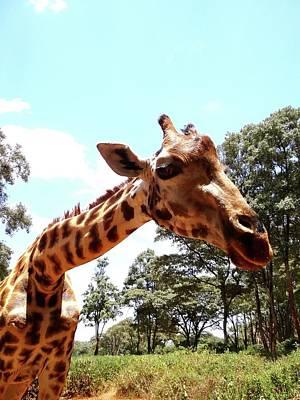Exploramum Photograph - Giraffe Getting Personal 2 by Exploramum Exploramum