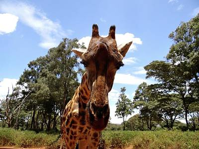 Unschooling Photograph - Giraffe Getting Personal 5 by Exploramum Exploramum