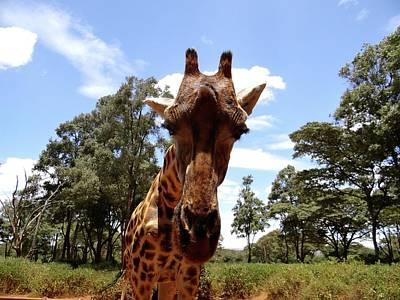 Exploramum Photograph - Giraffe Getting Personal 5 by Exploramum Exploramum