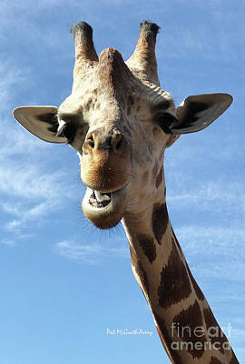 Photograph - Giraffe Greeting by Pat McGrath Avery