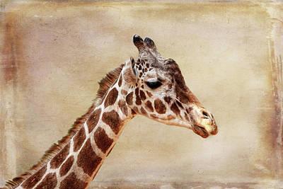 Photograph - Giraffe Horizontal by Judy Vincent
