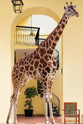 Photograph - Giraffe's Den by Les Palenik
