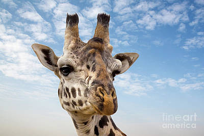 Photograph - Giraffe In The Masai Mara by Jane Rix