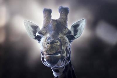 Giraffe Art Print by Joana Kruse