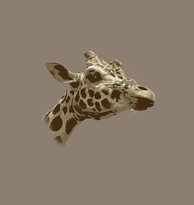 Digital Art - Giraffe by Joyce Wasser
