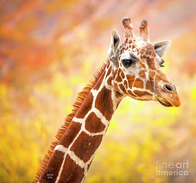 Photograph - Giraffe Large Canvas Art, Canvas Print, Large Art, Large Wall Decor, Home Decor, Wall Art by David Millenheft