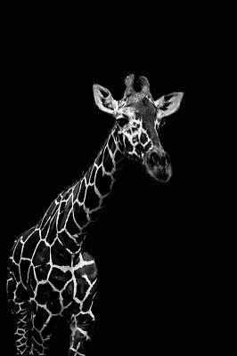 Photograph - Giraffe by Mark Perelmuter