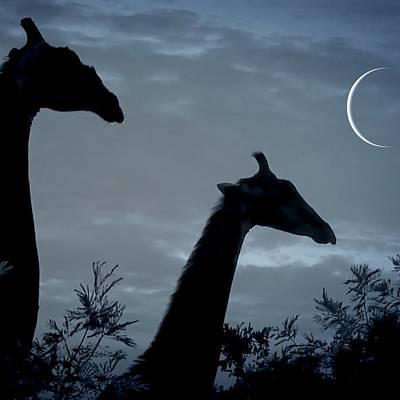 Giraffe Moon  Art Print
