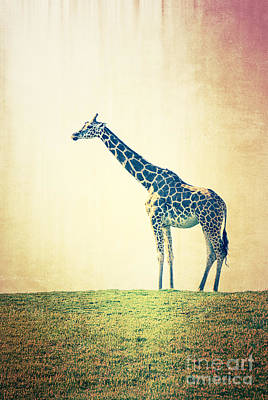 Photograph - Giraffe On A Hill by Jim And Emily Bush