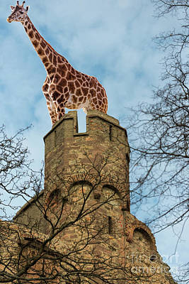 Photograph - Giraffe On Fort by Les Palenik
