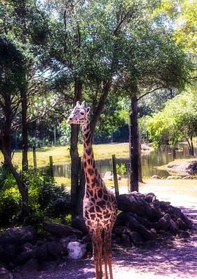 Just Desserts - Giraffe on the Move by Kendall Tabor