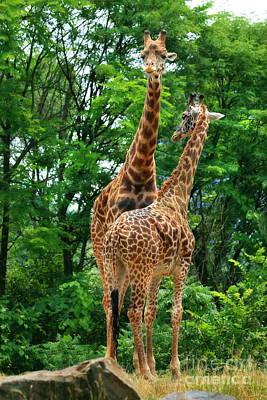 Photograph - Giraffe Pair by Angela Rath
