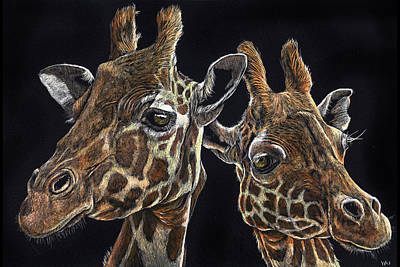Drawing - Giraffe Pair by William Underwood