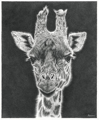 Best Sellers - Animals Drawings - Giraffe Pencil Drawing by Casey