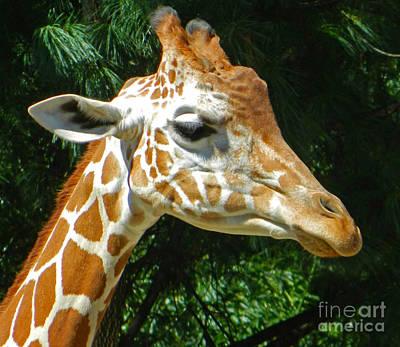 Friendly Digital Art - Giraffe Portrait by Emmy Marie Vickers