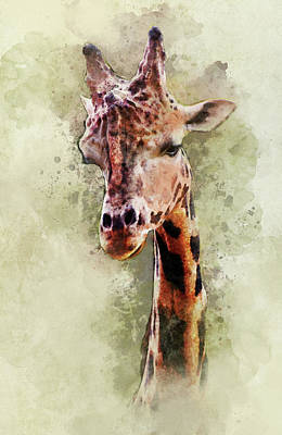 Digital Art - Giraffe Portrait by Jaroslaw Blaminsky