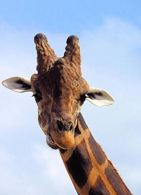 Photograph - Giraffe Portrait by Rosalie Scanlon