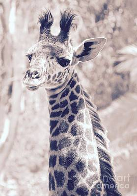 Photograph - Giraffe Portrait by Suzanne Oesterling