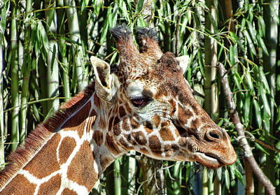 Photograph - Giraffe Profile by Cathy Harper