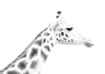 Photograph - Giraffe Profile by Hal Halli