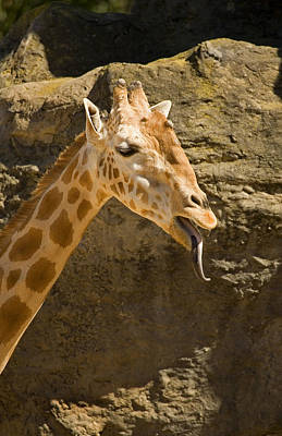 Giraffe Raspberry Original by Mike  Dawson