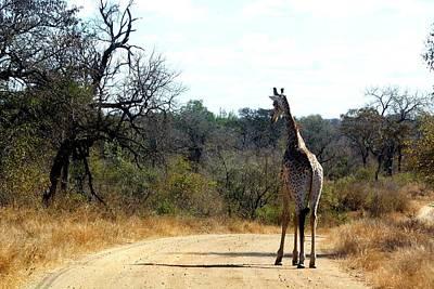 Art Print featuring the photograph Giraffe by Riana Van Staden