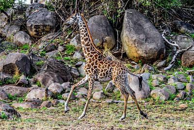 Photograph - Giraffe Running On The Serengeti by Marilyn Burton