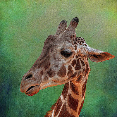 Photograph - Giraffe Square Painted by Judy Vincent